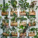 Hilton Carter zeigt dir, wie man Pflanzen vermehrt - Airbnb