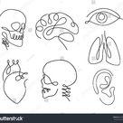 Eine Linie menschliche Organe gestalten Design Stock Vektorgrafik Lizenzfrei 604630235