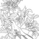 Mockingbird Coloring Pages - Best Coloring Pages For Kids