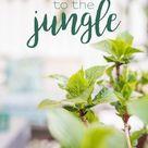 Raus in die Botanik - mein Balkon makeover - Leelah Loves