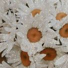 Daisy's look better with a little sparkle 🌼 on We Heart It