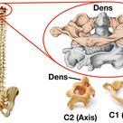 Vertebral Column Anatomy: Cervical, Thoracic, Lumbar, Sacral Spine — EZmed