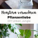 Monstera vermehren und pflegen - DIY Urban Jungle   DIY Blog   Do-it-yourself Anleitungen zum Selber