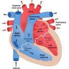 What Is The Heart? - DR MANI