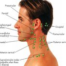 ENT - Nose & Neck - Physician Assistant Physical Assessment I with Misc at South University - StudyBlue