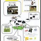 INFORMACION ANIMALES on Pinterest | 84 Pins
