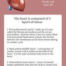 Learn the Cardiovascular System
