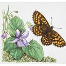 Fine Art Print. Heath Fritillary butterfly (Melitaea athalia) flying near a purple flower