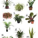 10+ Houseplants That Need (Almost) Zero Sunlight