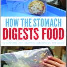 How the stomach breaks down food