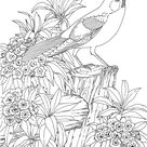 25+ Free Printable Adult Coloring Pages