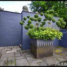 Ivy Plants