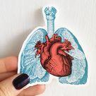 Anatomy Stickers - Set of 3 - Laptop Sticker Set - Stocking Stuffer - Anatomical Heart - Anatomical Lungs - MacBook Decal - STC023