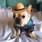 french bulldog clothing store @frenchiely