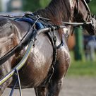 Why Do Horses Sweat? The Super Surprising Secret