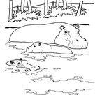 Realistic Hippopotamus Hippo Coloring Book Page