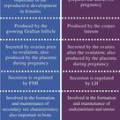 Difference Between Estrogen and Progesterone | Definition, Production, Secretion, Role, Similarities and Differences