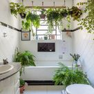 plant-filled bathroom - love the hanging plants in here