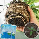 (1+1 Gratis) Rapid Rooting Powder™ Pflanzen Wachstumshormone