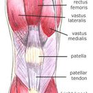 Anatomy of the knee Bones Muscles Arteries Veins Nerves