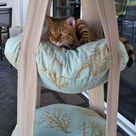 Katzen Zubehör auf Amazon.de bestellen.