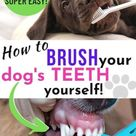Dog Teeth Brushing Tips: See Exactly How To Brush Your Dog's Teeth Yourself (It's Cheaper Than A Dog