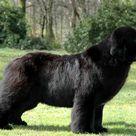 Huge Dogs