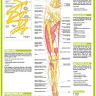 Anatomy Posters human Body Nervous System Charts   Etsy