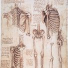 Print of Pen and ink studies by Leonardo da Vinci, c1510, of human thorax, pelvic, and leg bones