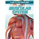 A Look at the Human Body: The Muscular System (Paperback)