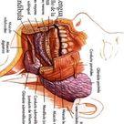 Worksheetfun The Human Body to learn Spanish 32
