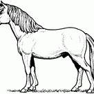 Kreative Kostenlose Malvorlage Pferd  Sammlung