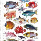 18 FAB Exotic TROPICAL FISHES. Fishes Digital Collage Sheet. Vintage Fish Illustration. Digital Fish Download