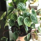 Keep Your Indoor Plants Alive While on Vacation - Houseplant Tips