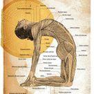 Yoga Kamel (Ustrasana) - Aktiviert dein Vissudha-Chakra
