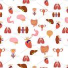 Human Internal Organs Pattern