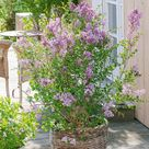 Romantischer Look für die Terrasse