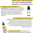 Benefits Of Lemongrass On Your Natural Hair   Millennial in Debt