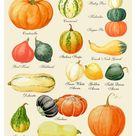 Autumn Leaves Print, Leaf Varieties, Types of Leaves, Seeds, Fall Colors, Harvest, Leaf Chart, Thanksgiving, Halloween, October, Hostess