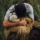Lions Photos