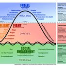 Polyvagal Theory, Fight, Freeze or Engage