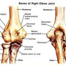 Elbow Joint: Anatomy, Movement & Muscle involvement » How To Relief