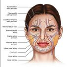 FACE Anatomy muscle veins Detailed EDUCATIONAL SCIENCE poster print poster
