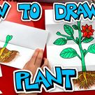 How To Draw A Plant With A Folding Surprise - Art For Kids Hub -