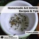 Ant Killer Recipe
