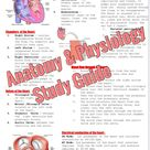 Anatomy & Physiology Study Guide   Etsy