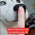 FUNNY HUSKY DOG VIDEO FOR HUSKY DOG