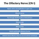 Cranial  nerves  pathway update
