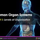 PPT - Human Organ Systems Introduction + Student Notes - Distance Learning