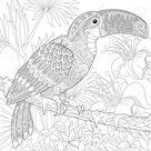 Stilisierte Tukan Vogel auf Palme Zweig unter Hibiskusblüten sitzen. Handskizze für Erwachsene Anti Stress Malbuch Seite mit Doodle Elemente.